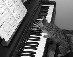 кот по нотам играет на пианино