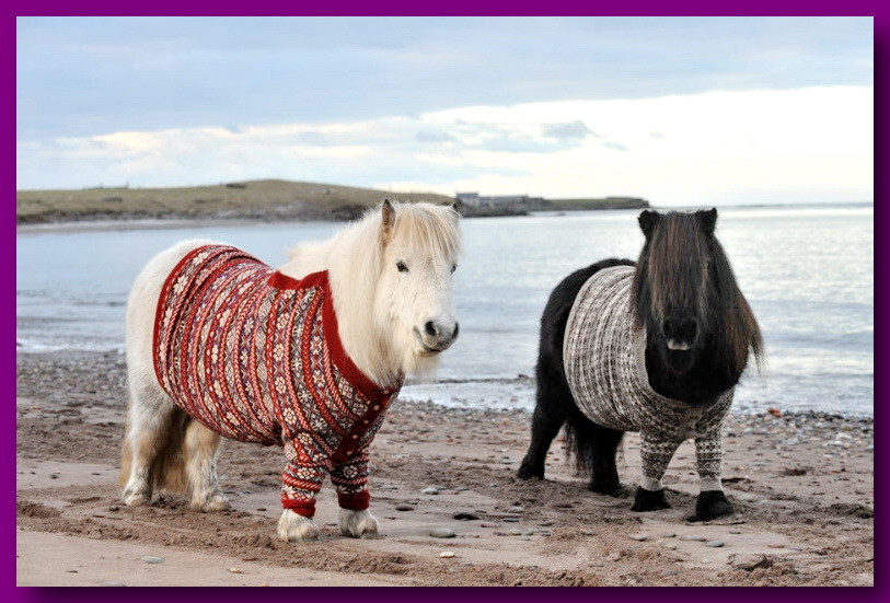 шетландкие пони