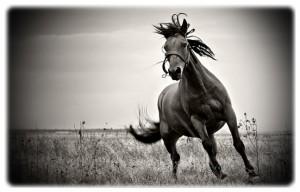 черно белая фотография лошади