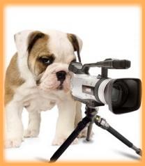 фотограф-пес