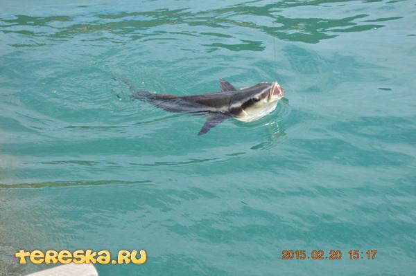 бухта-кита-рыба