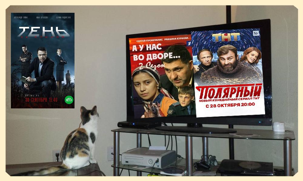 кот смотрит сериалы